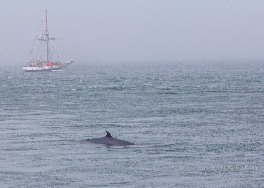 Bay of Fundy Whale Watching