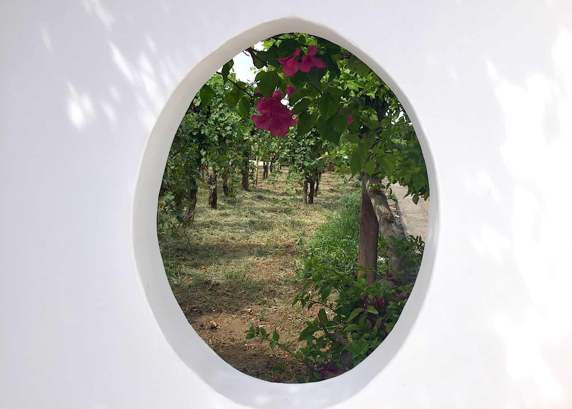 Peeking at Capofaro vineyards