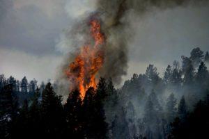 Gaia's Calling Through Fires